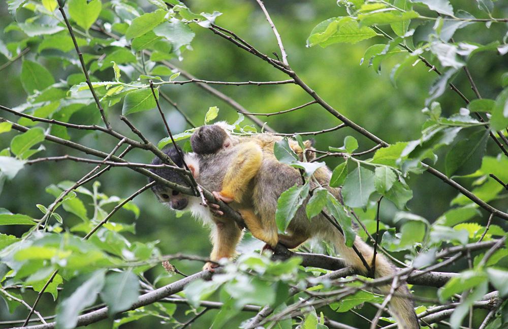 titten zeigen wildpark stuttgart