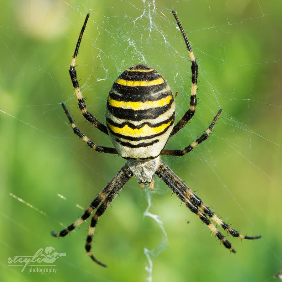 Spinnen Im Garten: Makrofotografie Insekten, Spinnen, Amphibien (Fauna
